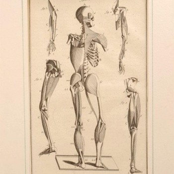 175Charpentier medical antique print k