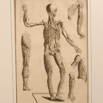 32Charpentier medical antique print h
