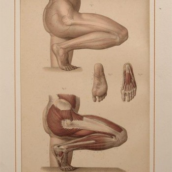 80Fau medical antique print - van Leest Antiques 320222 Q