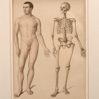 181Fau medical antique print - van Leest Antiques 320222 W