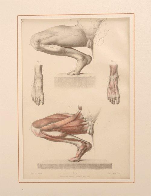 50Fau medical antique print - van Leest Antiques 320222 R