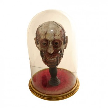 Anatomical head model in Dome - van leest Antiques   (3)