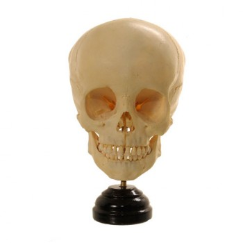 Child Skull 6 years - van Leest Antiques (1) - kopie - kopie