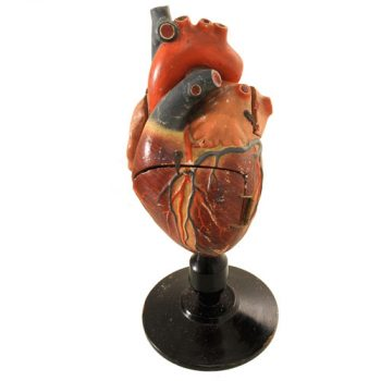 anatomical-heart-model-van-leest-antiques-1