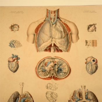 Bourgery and Jacobs print planche 9- van Leest Antiques  (1)