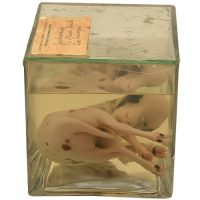 Jacob Sheep fetus - van Leest Antiques (3)