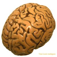 Anatomical brain model - van Leest Antiques (1)