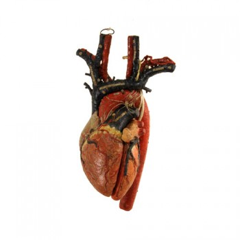 156Dr. Auzoux Heart model - van Leest Antiques (4)