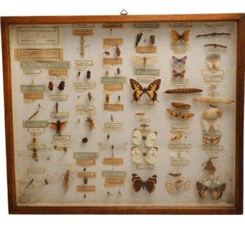 170Polak insect collection