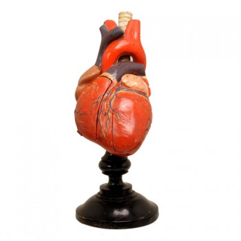 19Anatomical heartmodel 230601 Van Leest Antiques (1)
