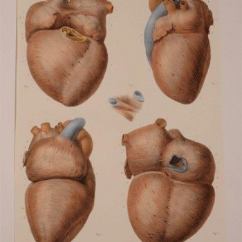 203Heart Print Bourgery et Jacob 1851 (2)