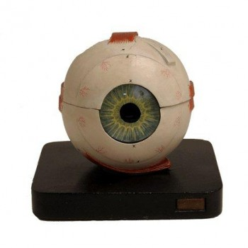 240Bock Steger Eye Model 280718 Van Leest Antiques