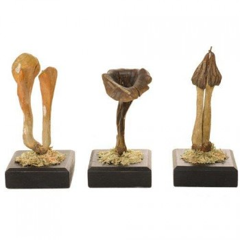 242Auzoux fungi models set 4 Van Leest Antiques
