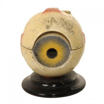 244Anatomic eye ball model van Leest Antiques 320429 (1)