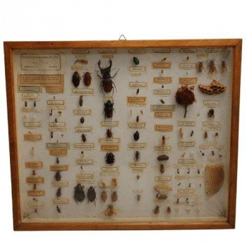 35insects in case