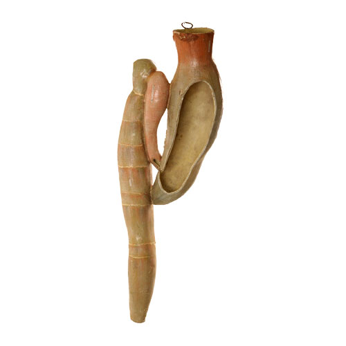 Stomach and intestinal tract of dogfish