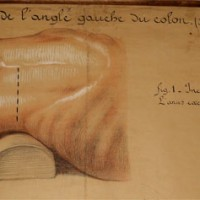 Anatomical chart by  J. Frantz - van Leest Antiques  (5)