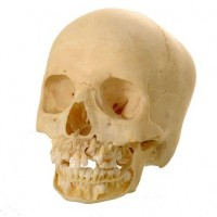 Child skull  van Leest Antiques (6)