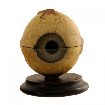 Anatomical eye model Somso - van Leest Antiques (1)