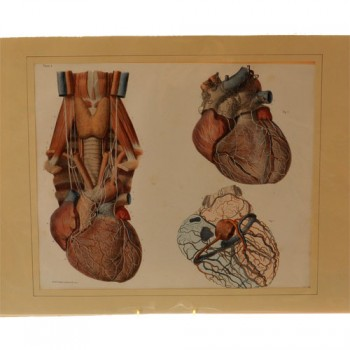 Bourgery & Jacob Heart print - van Leest Antiques (2)