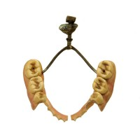 Dentures Ivory lower jaw - van Leest Antiques (1)
