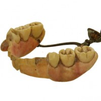 Dentures Ivory lower jaw - van Leest Antiques (2)