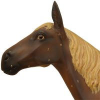 Anatomical horse model - van Leest Antiques (6)