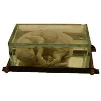 Serial cat fetus - van Leest Antiques (1)