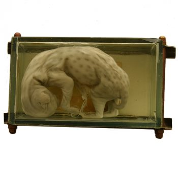 Serial cat fetus - van Leest Antiques (3)