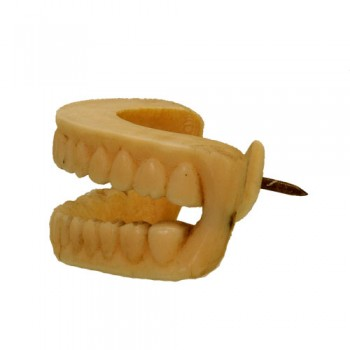 Denture education - van Leest Antiques (4)