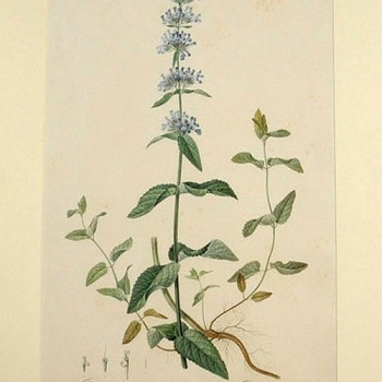 Botanical Authentique Prints