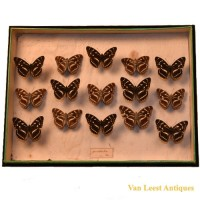 Gundlach ia Poey Butterfly display 2 - van Leest Antiques (1)
