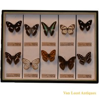 Taxidermist Butterfly box 1 - van Leest Antiques (1)