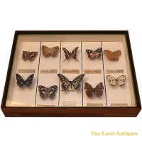 Taxidermist butterfly display - van Leest Antiques (1)
