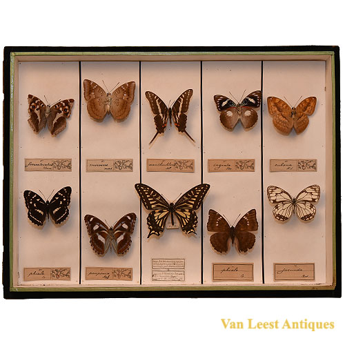 Taxidermist butterfly display - van Leest Antiques (2)