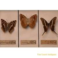 Taxidermist butterfly display - van Leest Antiques (3)