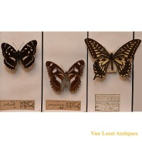 Taxidermist butterfly display - van Leest Antiques (4)