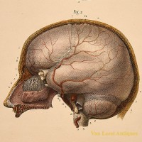 Anatomical brain print Hirschfied Ey Leveille - van Leest ANtiques (4)