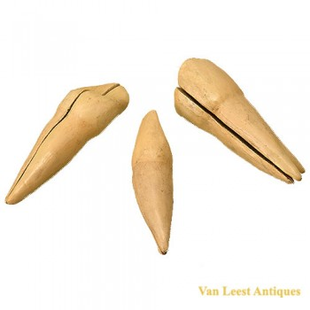 Anatomical tooth models van Leest Antiques (1)