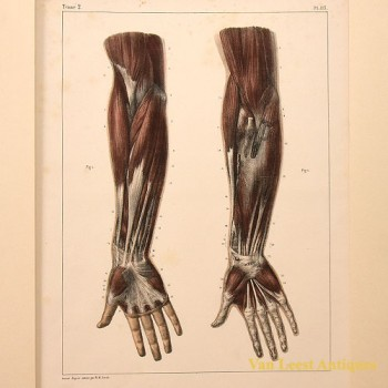 Bourgery et Jacobs Anatomical prent - van Leest Antiques (1)