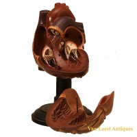 anatomical heart model Somso - Van Leest Antiques (4)