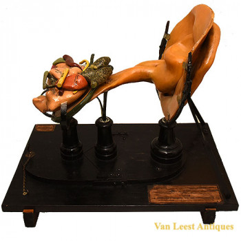 Ziegler Wax Ear model - van Leest Antiques (1)
