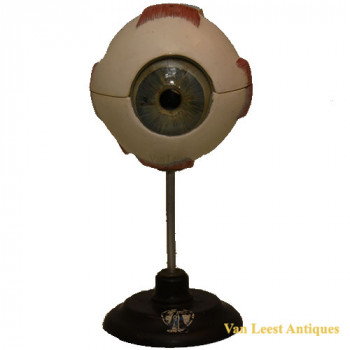 Anatomical eye model - van Leest Antiques (1)