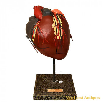 anat. deyrolle Heart model - van Leest ANtiques (1)