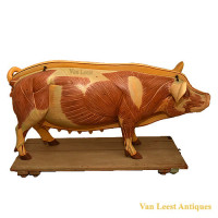 Anatomical pig model - van Leest Antiques (1)